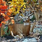 Autumn in the Wild by Lanis Rossi