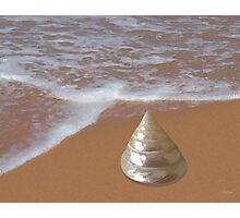 Pearly Trochus Shell by the Shore Photographic Print