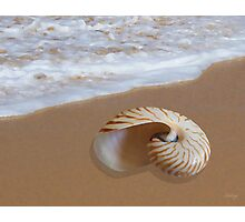 Nautilus Shell by the Shore Photographic Print