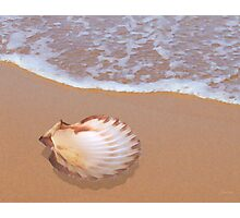 Scallop Shell by the Shore Photographic Print