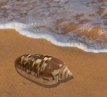 Cone Shell by the Shore by ShellsbyShore