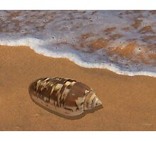Cone Shell by the Shore Photographic Print