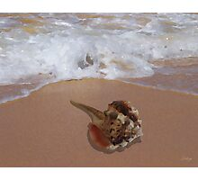 Murex Shell by the Shore Photographic Print
