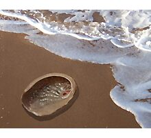 Abalone Shell by the Shore Photographic Print