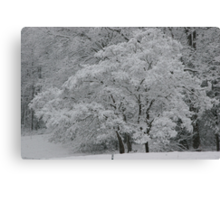 silent white Canvas Print