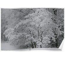 silent white Poster