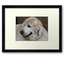 Fun With The Rolling Framed Print