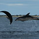 Gippsland Lakes Dolphins (not photoshopped!) by Erial