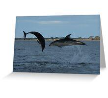 Gippsland Lakes Dolphins (not photoshopped!) Greeting Card