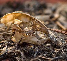 Beauty in death by Lisa Sweet
