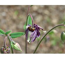 Ladybird Lovin' Photographic Print