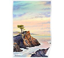 Lone Cypress Tree Pebble Beach California Poster