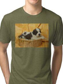 Jody the Saint Bernard puppy Tri-blend T-Shirt