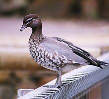 Duck... Duck... Duck? by Sboydston