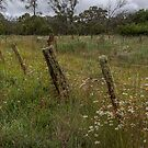 Ben Lomond • NSW • Australia by William Bullimore