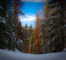 Winter Wonderland by Emily Jansen