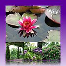 Hyde Hall Floral Collage featuring Water Lily by BlueMoonRose