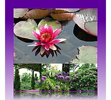 Hyde Hall Floral Collage featuring Water Lily Photographic Print