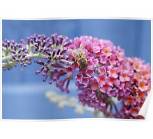 The Bee and The Buddleia  Poster