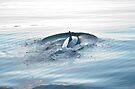 Splashdown! by Odille Esmonde-Morgan
