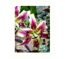 A lovely lily from my Mom's yard Art Print