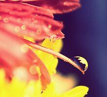 Beckoning Summer by photolife1622