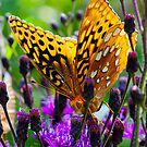 Great Spangled Fritillary by Brooke Winegardner