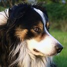 A True Dog. by Michael Haslam