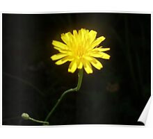 shining yellow flower Poster
