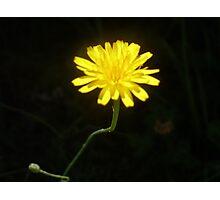 shining yellow flower Photographic Print