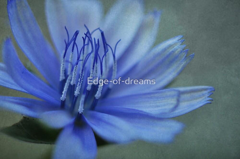 Fragile Beauty by Edge-of-dreams