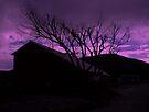 """""""Purple Haze"""" by waddleudo"""