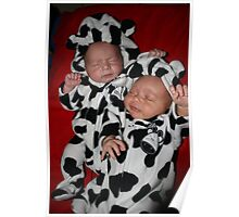 Cow babies Poster