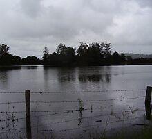 Flooded Paddock Nimbin Road by buddhacoconut