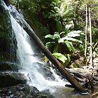 Lilydale Falls - Lilydale, Tasmania by RainbowWomanTas