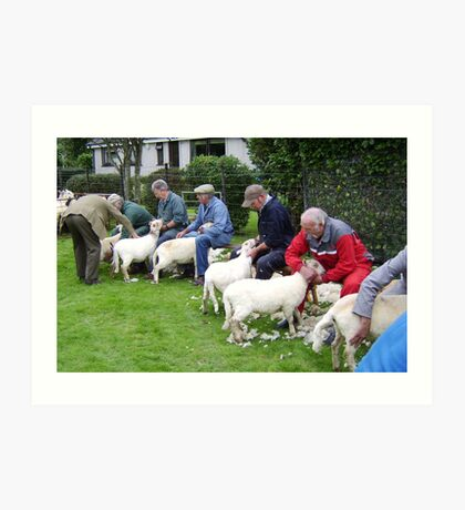 Sheep Shearing contest in Wales Art Print