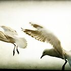 ~ In Flight ~ by Lynda Heins