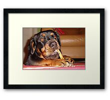 Like A Dog With A Bone Framed Print