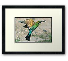 Rainbow Bee-Eater 409 Framed Print