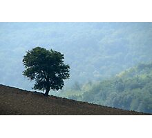 Lone Tree - Tuscan Hillside, Italy Photographic Print
