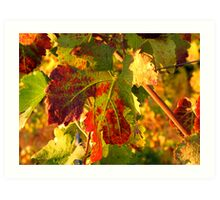 Grape Leaves - Tuscany Vineyard, Italy Art Print