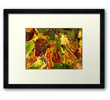 Grape Leaves - Tuscany Vineyard, Italy Framed Print