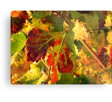 Grape Leaves - Tuscany Vineyard, Italy Metal Print