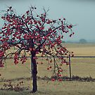 Persimmon Tree by jujubean