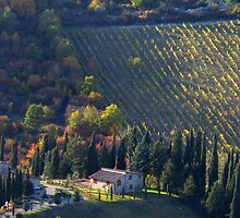 Tree Lined Hills - Tuscany, Italy by ljroberts