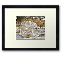 Wolf Walk Framed Print