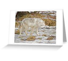 Wolf Walk Greeting Card