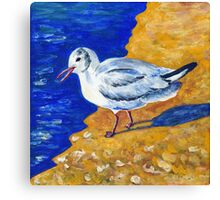 Seagull at the Baltic Sea Canvas Print