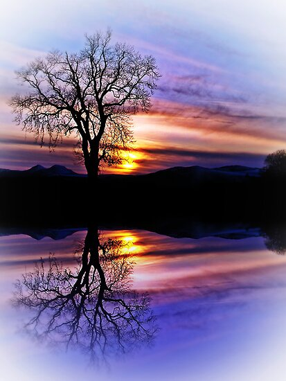 The Tree Of Reflections by Aj Finan