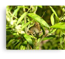 PEEK-A-BOO!! Canvas Print